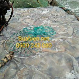 Sứa biển bán tại xưởng, giá sĩ, sứa biển xuất khẩu